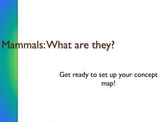 Mammals: What are they?