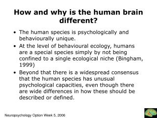 How and why is the human brain different?