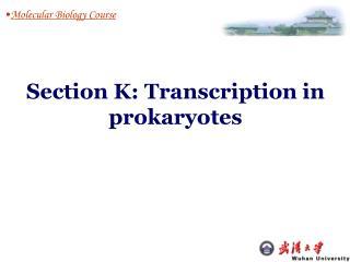 Molecular Biology Course