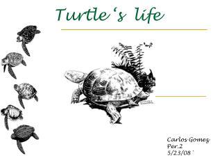 Turtle 's  life