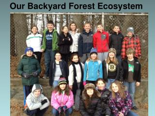 Our Backyard Forest Ecosystem