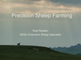 Precision Sheep Farming