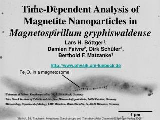Time-Dependent Analysis of  Magnetite Nanoparticles in  Magnetospirillum gryphiswaldense