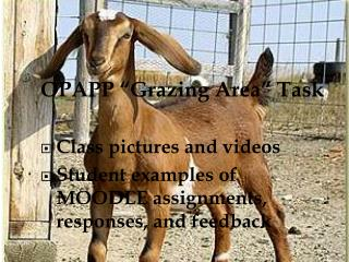 "OPAPP ""Grazing Area"" Task Class pictures and videos"