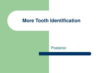More Tooth Identification