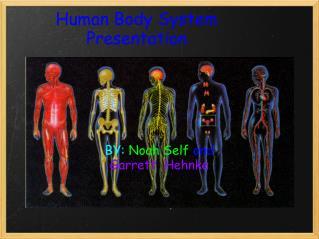Human body System Presentation