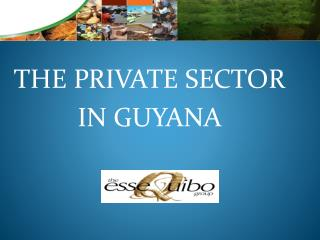 THE PRIVATE SECTOR IN GUYANA