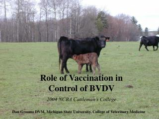 Role of Vaccination in Control of BVDV