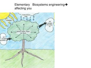 Elementary   Biosystems engineering ?  affecting you
