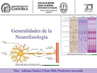 Generalidades de la Neurofisiolog�a