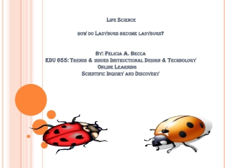 The Wonderful Ladybugs