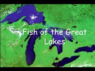Fish of the Great Lakes