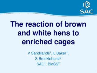 The reaction of brown and white hens to enriched cages
