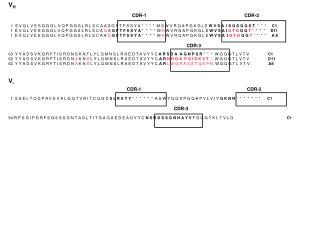 V H CDR-1         CDR-2