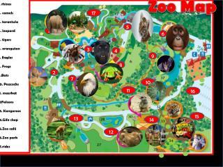 1.  rhinos 2 . camels 3 . tarantula 4 . leopard 5 . tigers 6 . orangutan 7 .  Eagles  8. Frogs