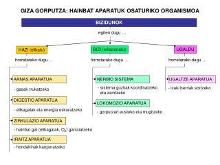GIZA GORPUTZA: HAINBAT APARATUK OSATURIKO ORGANISMOA