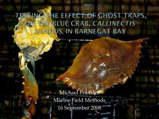 Testing the Effect of Ghost Traps on the Blue Crab,  Callinectis Sapidus , in Barnegat  Bay