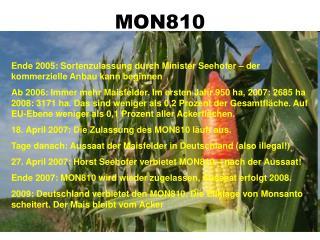 MON810 Eine Pflanze wird durchmogelt!