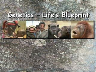 Genetics – Life's Blueprint