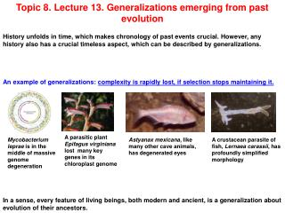 Topic 8. Lecture 13. Generalizations emerging from past evolution