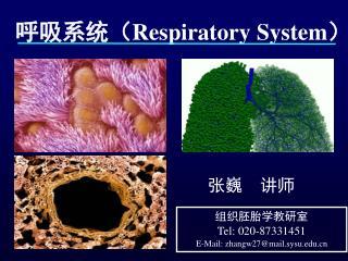 呼吸系统( Respiratory System )