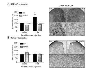 A)  OX-42  (microglia)