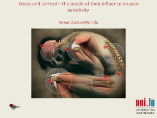 Stress and cortisol – the puzzle of their influence on pain sensitivity  fernand.anton@uni.lu