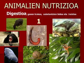 ANIMALIEN NUTRIZIOA