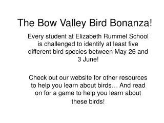 The Bow Valley Bird Bonanza!