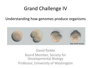 Grand Challenge IV