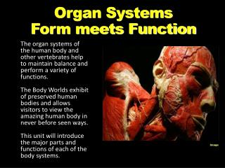 Organ Systems Form meets Function