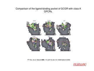 FY Siu et al. Nature 000 , 1-6 (2013)  doi:10.1038/nature12393