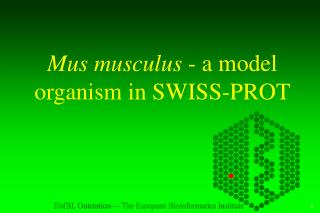 Mus musculus  - a model organism in SWISS-PROT