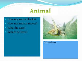 How my animal looks? How my animal moves? What he eats? Where he lives?