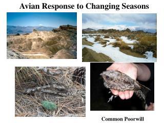 Avian Response to Changing Seasons