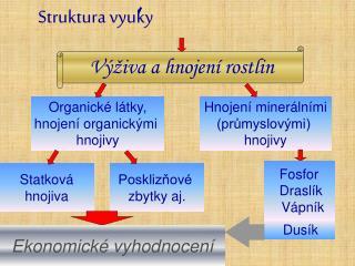 Struktura vyuky
