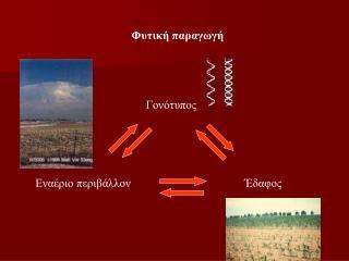 Φυτική παραγωγή