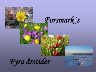 Fyra årstider