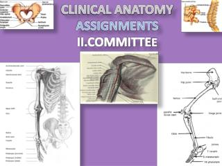 CLINICAL ANATOMY ASSIGNMENTS II.COMMITTE E