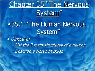 Chapter 35 �The Nervous System �