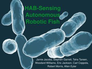 HAB-Sensing Autonomous Robotic Fish