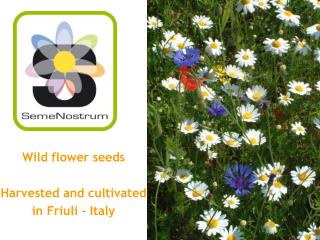 Wild flower seeds Harvested and cultivated  in Friuli - Italy