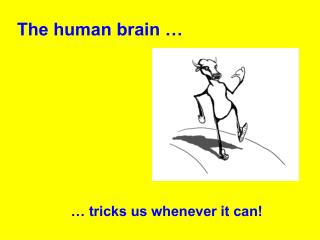 The human brain …