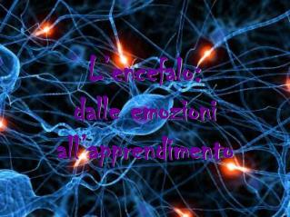 L�encefalo:  dalle emozioni all�apprendimento