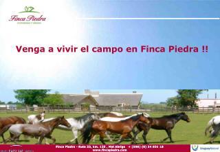 Venga a vivir el campo en Finca Piedra !!