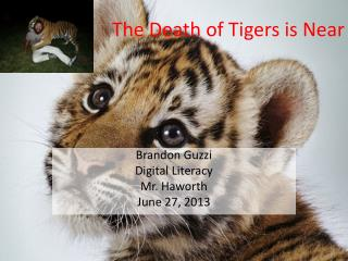 The Death of Tigers is Near