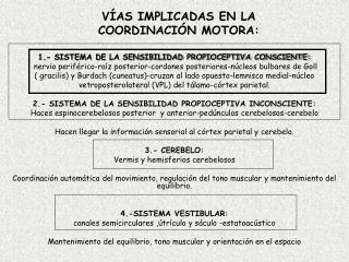 VÍAS IMPLICADAS EN LA COORDINACIÓN MOTORA: