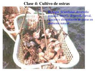Clase 4: Cultivo de ostras