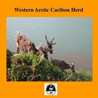 Western Arctic Caribou Herd