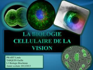 La biologie cellulaire de la vision